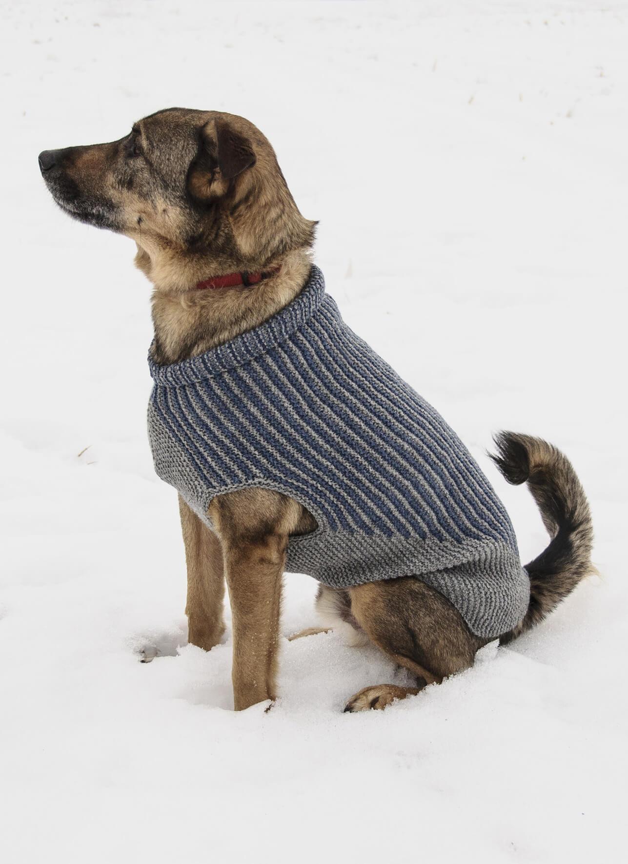 Bird Island Dog Sweater Blue Sky Fibers